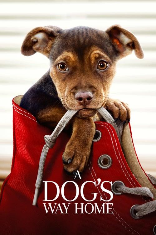A Dogs Way Home 2019 iNTERNAL DVDRip x264-HONOR